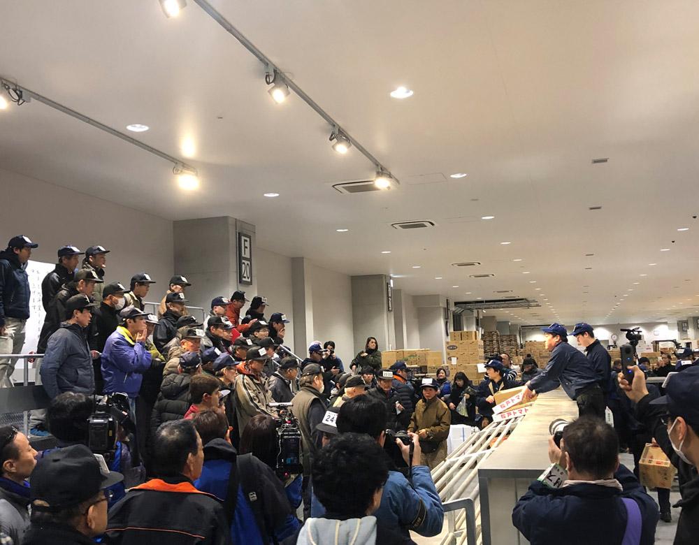 豊洲市場には日本一たくさんの鮪が入荷します