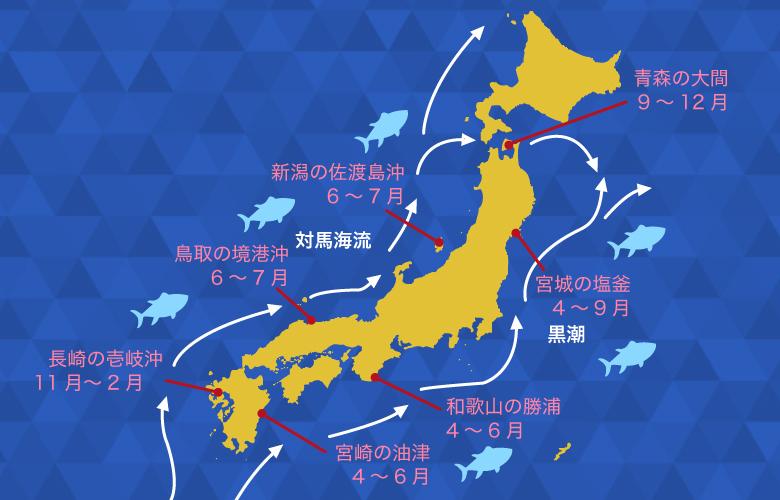 鮪は回遊魚。長崎の壱岐沖、鳥取の境港沖、新潟の佐渡島沖、宮崎の油津、和歌山の勝浦、宮城の塩釜などが有名な漁場