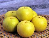 新品種梨 なつひめ 鳥取県産 約2kg (5〜8玉) ※冷蔵