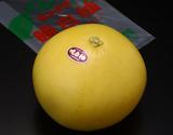 『晩白柚(ばんぺいゆ)』 熊本県産 1玉 約1.5kg