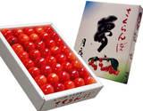 群馬県月夜野産さくらんぼ 佐藤錦「夢」秀品 3Lサイズ (約300g)化粧箱 ※冷蔵