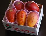 『訳あり沖縄マンゴー』 約1.5kg(3〜6玉)