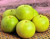 『二十世紀梨』 鳥取産 秀品 約1.5kg(4〜6玉)