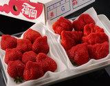 『あまおういちご』福岡県八女産 G(グランデ)約270g×2パック ※冷蔵