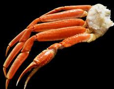 『巨大ボイルズワイ蟹』