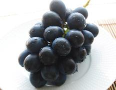 丸ごと食べられる黒ブドウ「ナガノパープル」