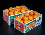 『味ロマン』 長崎県産 2S〜Mサイズ 約2.5kg×2箱