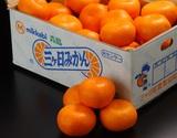 『三ヶ日みかん』 静岡県産 青島種 3L〜4Lサイズ 約4kg