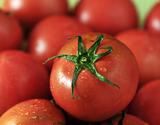 『夜須のフルーツトマト』 高知県夜須町産 約1.8kg(24〜42玉)