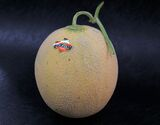 『夕張メロン』 《良品》 北海道産 1.3kg×1玉 産地ギフト箱入り