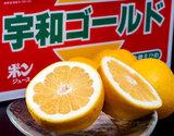 『宇和ゴールド』愛媛県産 優・秀品 2L〜4L 約6.5kg(12〜20玉)