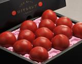『塩トマト太陽の子 ロイヤルセレブ』 熊本県八代産 2S〜L 約900g(8〜18玉)