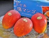 『塩マンゴー』 沖縄県宮古島産 約1kg(2〜3玉) 化粧箱
