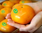 「太秋柿」熊本県産 秀品 約3.5kg(8〜14玉)産地箱  ※常温
