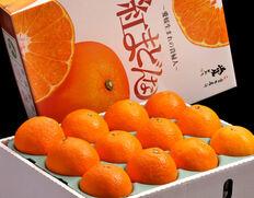 年内最高峰のとろける柑橘「紅まどんな」