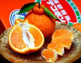 『樹熟デコポン』 愛知県蒲郡産 約3kg(8〜12玉)