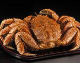 特大『茹で毛蟹』 北海道産 1杯 約1kg ※冷凍