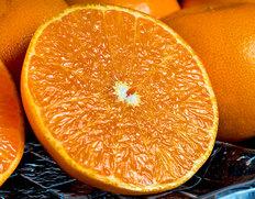 最高峰柑橘「せとか」が訳あり 送料無料・2,780円