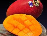 【母の日特選】宮崎県産 完熟マンゴー 太陽のタマゴ 化粧箱 約900g(2〜3玉)