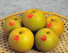貴重な鳥取県オリジナル高糖度梨「新甘泉」