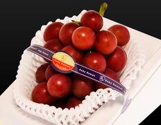 日本最高級の大粒葡萄『ルビーロマン』今なら早期割引