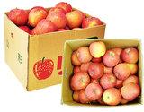 『訳ありサンふじリンゴ』 山形県産 約10kgバラ詰め(26〜54玉)
