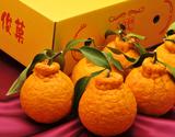『俊菓デコ』和歌山県産 約1.8kg(5〜6玉)