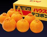 【ハウス栽培の極上品!】『有田デコポン』 和歌山・有田産 2.5kg(6〜8玉)