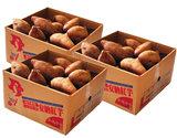 【朝日マリオン】『安納紅』 鹿児島県種子島産 訳アリ小玉 約1.5kg×3箱