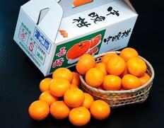長崎県産 希少な柑橘『津之輝』