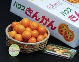 ステビア栽培『金柑』 鹿児島県産 L〜2L 約1kg