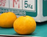 『ひめのつき』 愛媛県中島町産 キズ有り含む S〜3L 約5kg