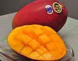 宮崎産 完熟マンゴー(太陽のタマゴ) 2〜3玉 約900g 化粧箱
