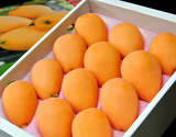 長崎県産 枇杷(びわ) L〜2L (9〜12玉) 化粧箱 ※冷蔵