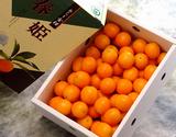 『春姫』 鹿児島産 L〜2Lサイズ 約2kg