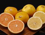 『ゴールデンクラウングレープフルーツ』 ルビー&ホワイト 各2.5kg(6〜8玉) 計2箱
