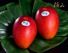 糖度17度を超える 木村さんの完熟マンゴー『時の雫』