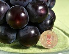 世界最大級のブドウ「藤稔」