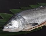 『新巻鮭』 北海道産 1尾 約2kg ※冷凍