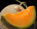 『夕張メロン』 北海道産 良品 約8kg(4〜6玉) ※常温