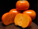 築地夜市!『ハウス次郎柿』 静岡県産 2玉(約500g)×2パック ※常温