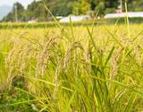 特別栽培米『天栄米』 福島県産 5kg 白米 【平成29年度産】