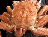 極大『茹で毛蟹』 北海道産 1杯 1.2kg以上 ※冷凍