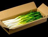 佐藤忠保さんが作る「春の越冬ねぎ」 福島県会津若松産 約3kg (1箱20本以上)