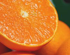 最高峰柑橘「せとか」が訳あり 送料無料・2,980円