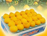 『デコポン』緊急スポット品 愛媛・佐賀・和歌山県産 約4.5kg