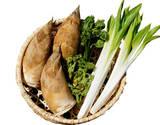 山菜5種セット (栽培品も入ります) 国産 約1.3kg ※冷蔵