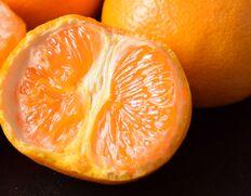 高糖度・貴重な柑橘【なつみ】 数量限定!