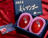 『美らマンゴー』沖縄県産 2玉(計約1kg)化粧箱入り ※常温