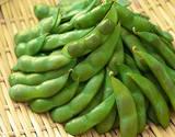 新潟県産 くろさき茶豆(枝豆)約250g×3袋(合計約750g)※冷蔵